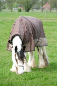 Deken Op Paard
