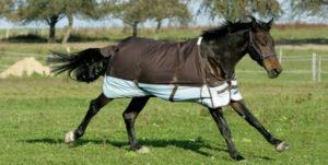 paardn met deken