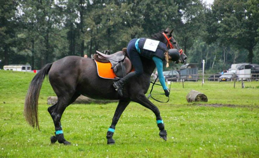 Veilig paardrijden met plezier!